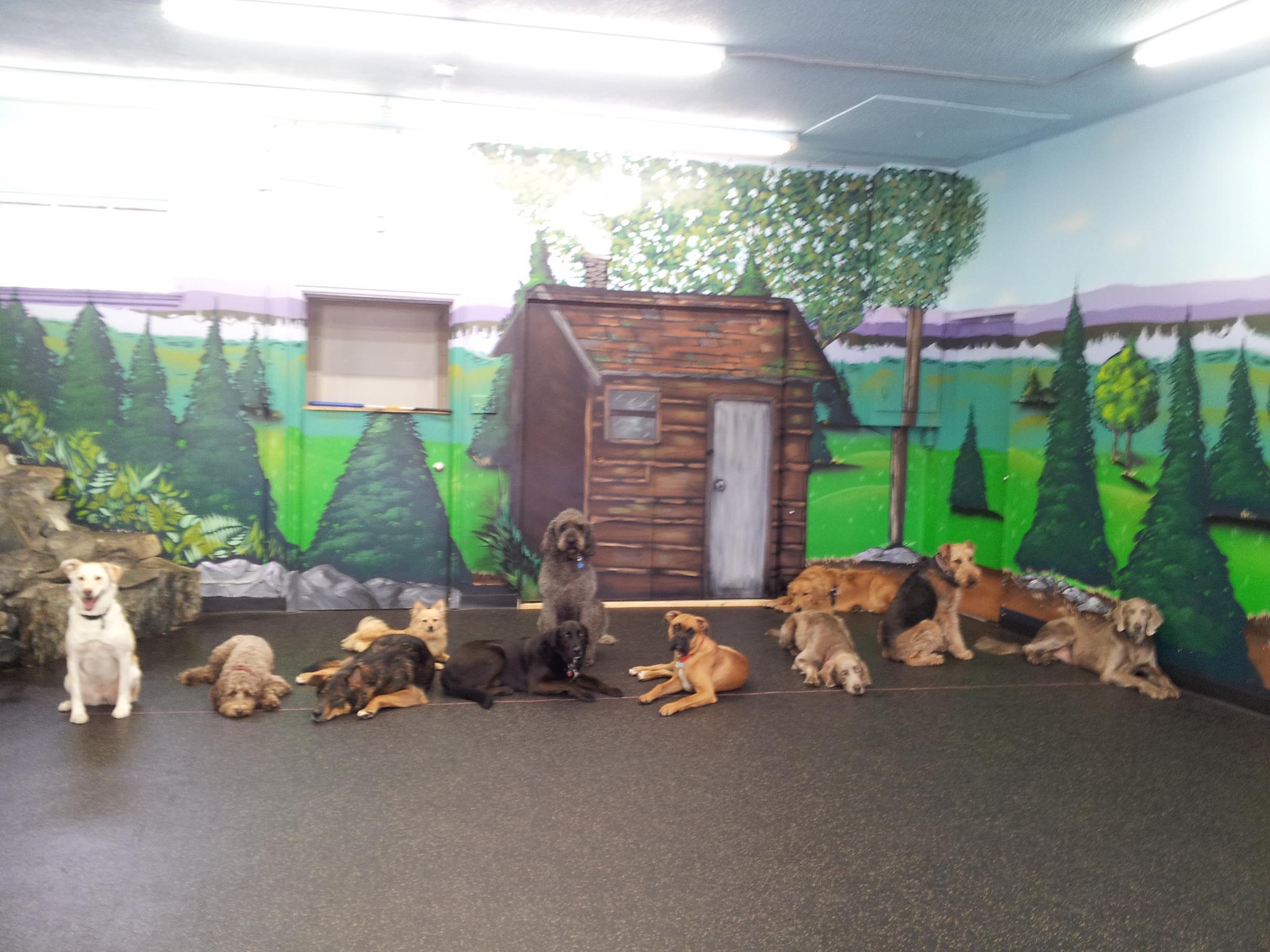 Ruffin It Dog Day Camp