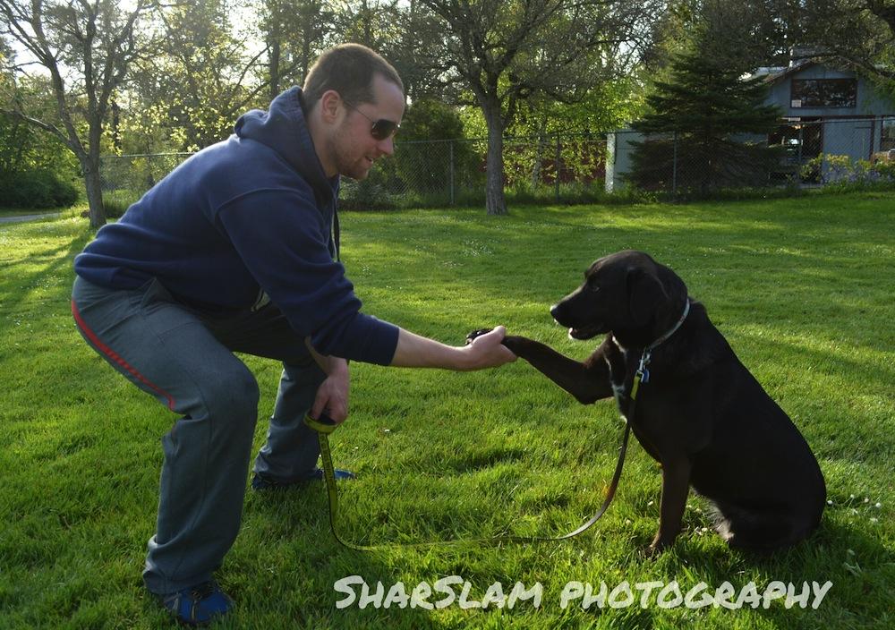 Dog Training Near Danville Ca