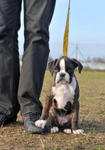 dog training puppy class